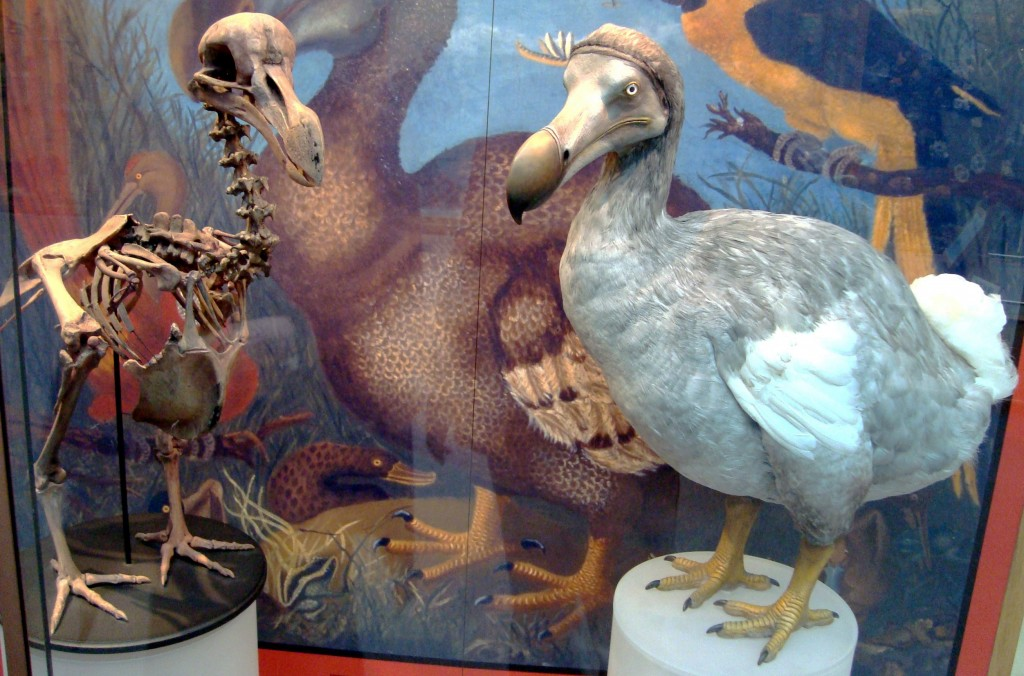 Oxford_Dodo_display