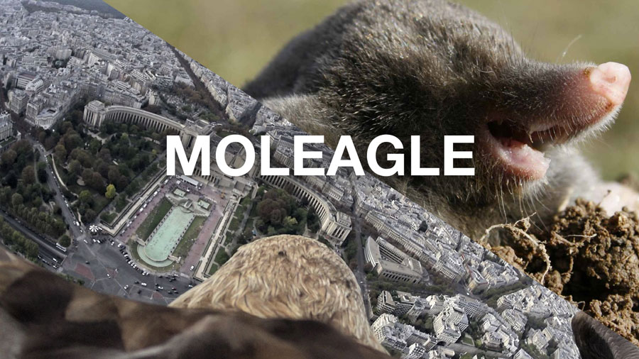 A picture of a mole and an eagle